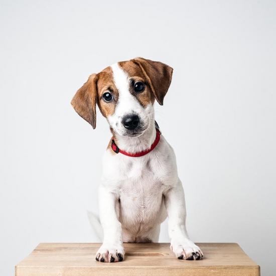 Curso Canino